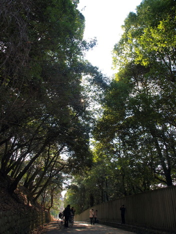 Road_with_trees_2