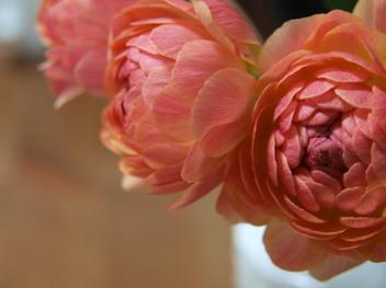 Three_flower