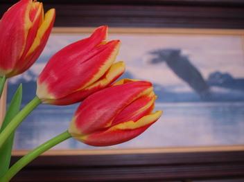 Tulip_with_a_hawk