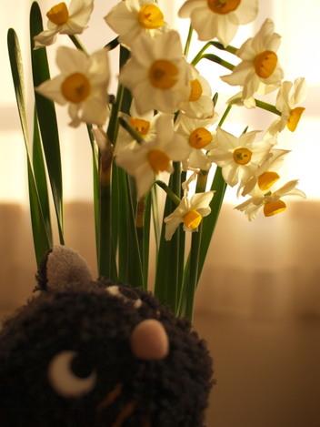 Nyah_flowers