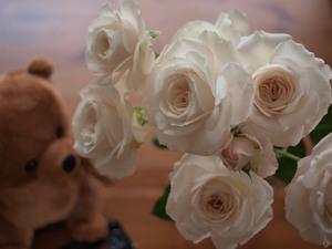 Kuma_and_roses_2
