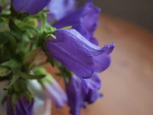 Ikoma_flower